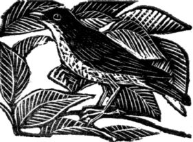 wood-engraving original print: The Thrush for Cambridge Book of Poetry for Children